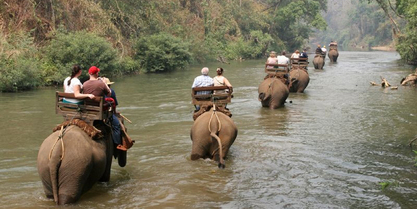 Elephant_Trek_6