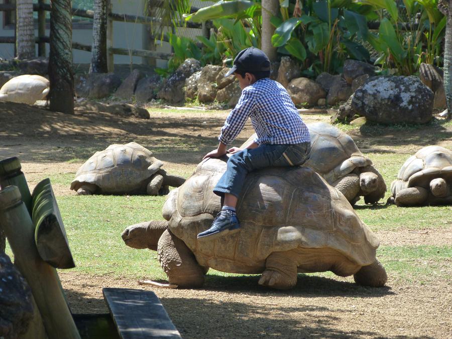 enclos des tortues géantes